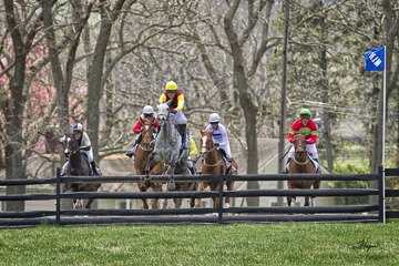 Maryland Steeplechase Racing Note Cards