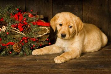 Happy Holidays_10x15-web4x5-web