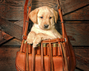 I'm Packed An Ready'ta Go 11x14