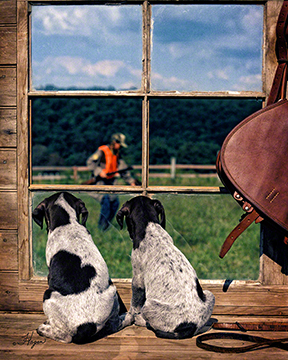 German Shorthairs